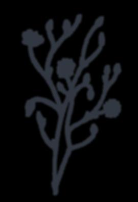 botnical flower