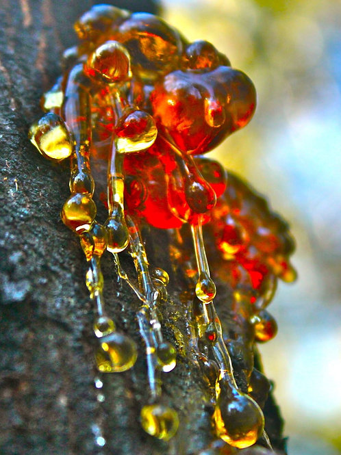 1 oz Myrrh Resin - Organic