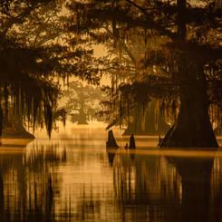 Louisiana Fall (3).jpeg