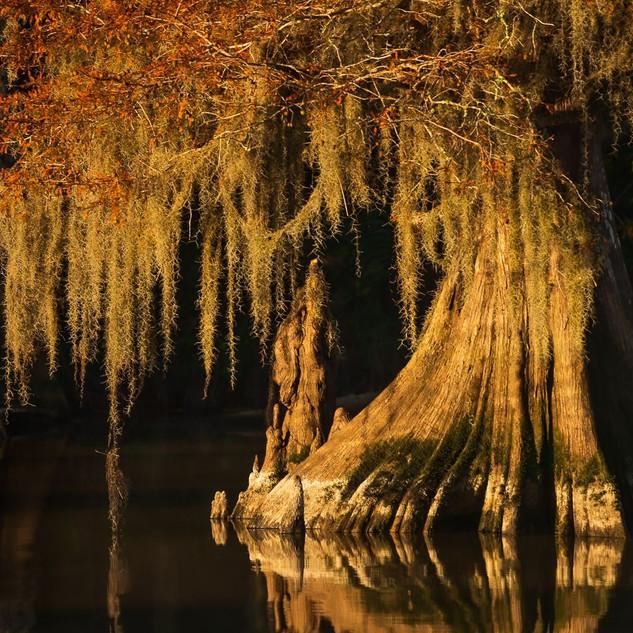 Louisiana Fall (5).jpeg
