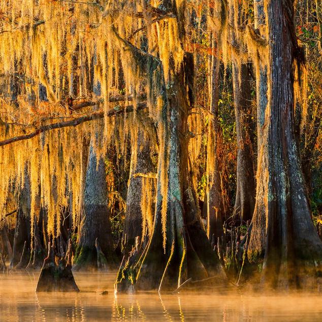 Louisiana Fall (2).jpeg