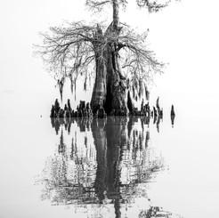 Louisiana Fall (13).jpeg