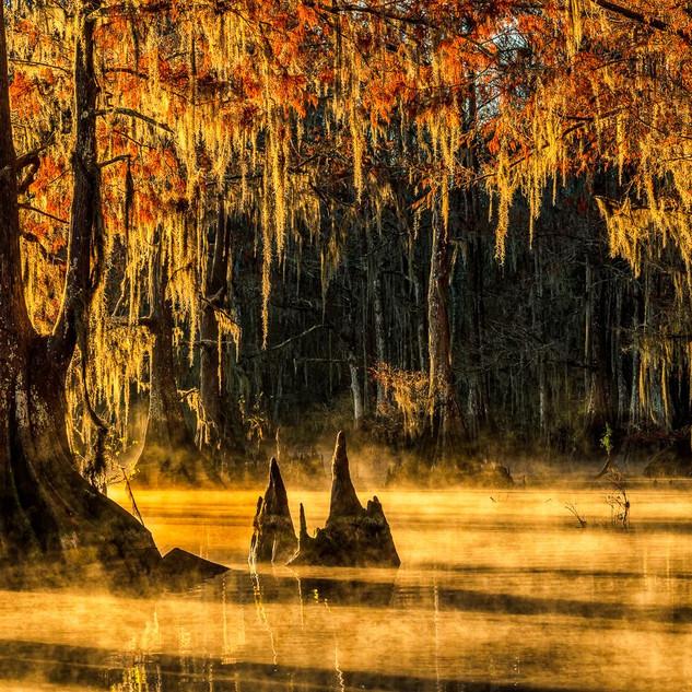 Louisiana Fall (11).jpeg