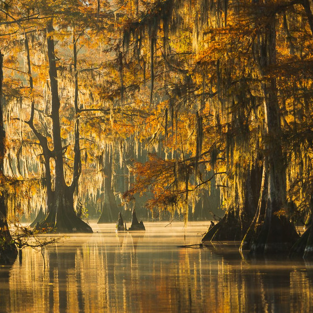 Louisiana Fall (7).jpeg