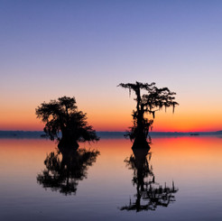 Louisiana Fall (9).jpeg