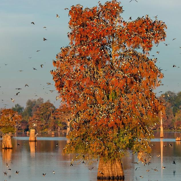 Louisiana Fall (12).jpeg