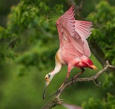 Louisiana Birding workshop 1.jpg