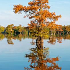 Louisiana Fall (1).jpeg