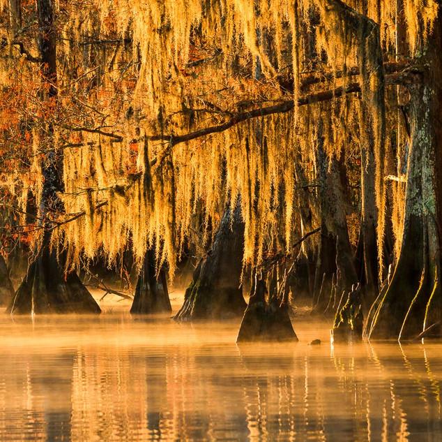 Louisiana Fall (8).jpeg
