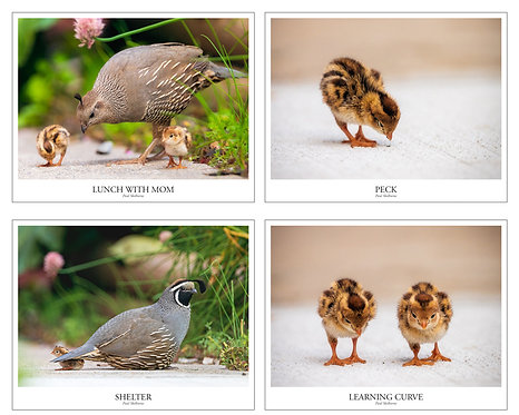 Courageous Quail Greeting Cards