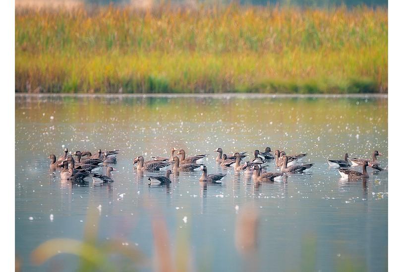 Birds in the Creston Valley Wildlife Management Area