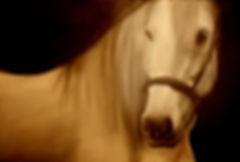White horse. $1200 20x30 inch