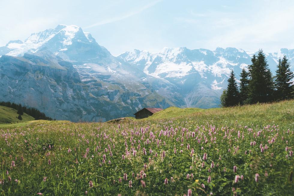 Swiss Meadow.jpg