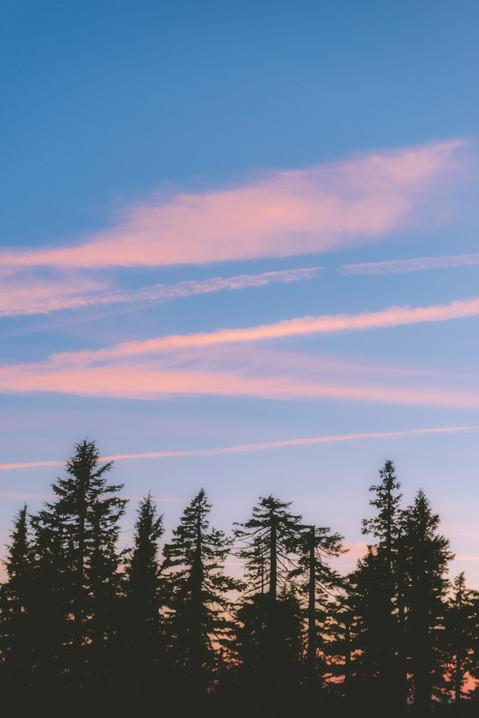 Oregon Sunset Trees.jpg