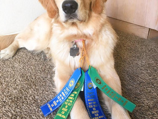 Our first AKC Rally Trials
