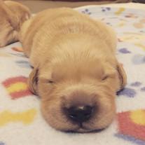 SleepyPuppy.jpg