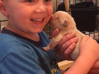 1 Week Old Puppies!