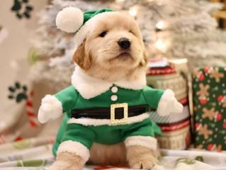 Puppy videos!