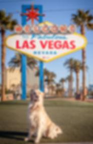 Las Vegas Golden Retrievers