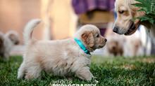 2018 Puppy Photoshoot!