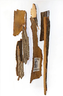 """Neither Here Nor There (2019) Tree bark, monofilament, canvas, 60x70"""""""
