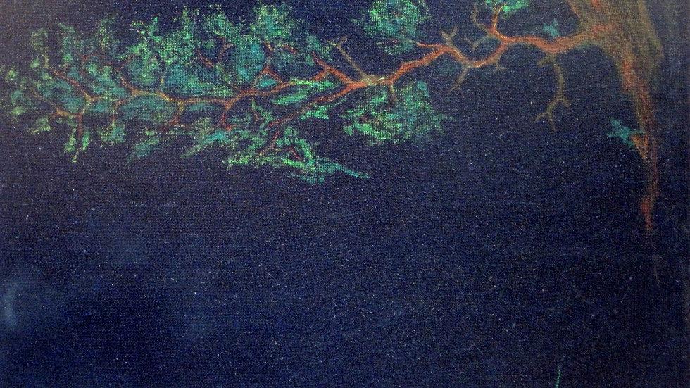 Branch at night