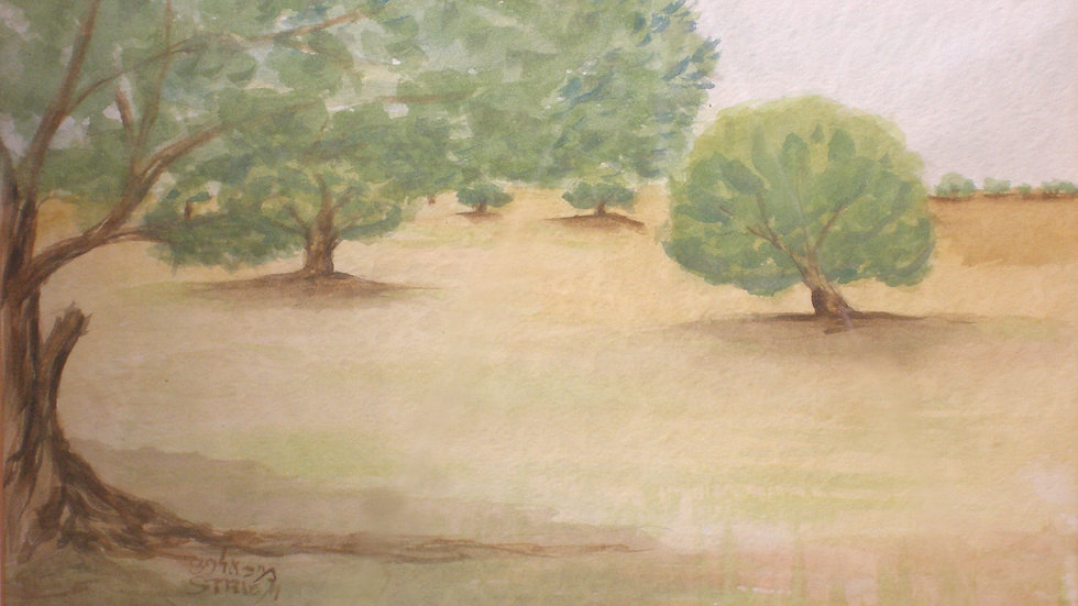 Olive trees in open land