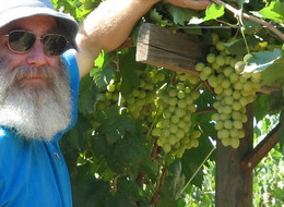 Dr. Michael Striem at a new seedless selection