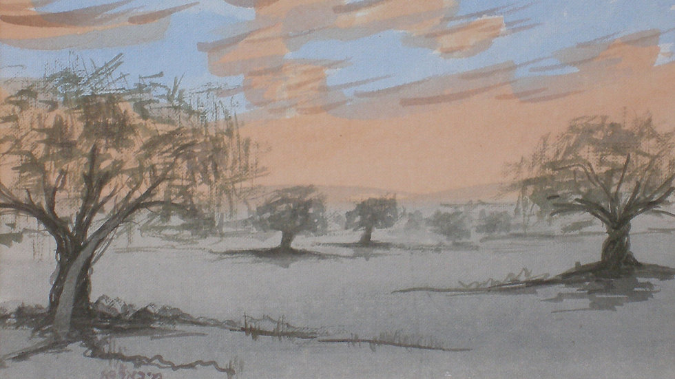 Olive trees sunset