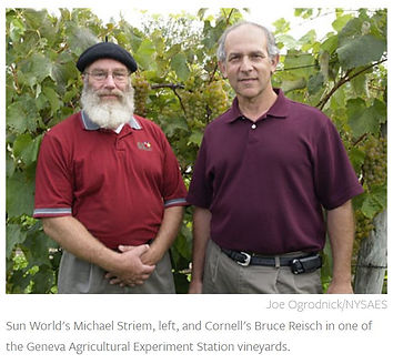 Striem.Reisch.Vineyard.jpg
