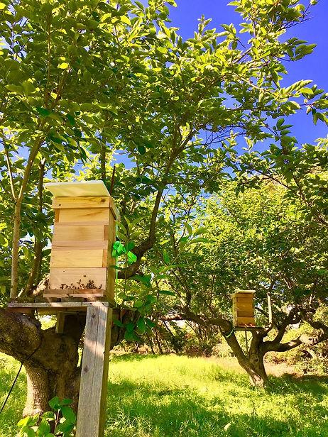 女性養蜂家が作る非加熱・無添加の生ハチミツ通販「貴和蜜」通販 / 蜂蜜靏屋(ハチミツツルヤ)