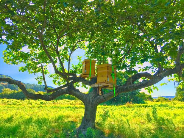 木に設置した巣箱の様子