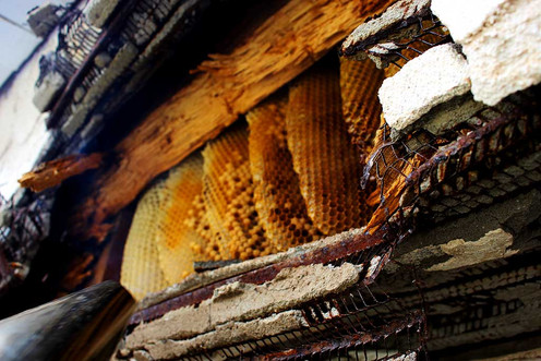 bees-in-home-2.jpg