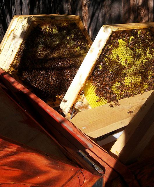 frames-in-hive-honey