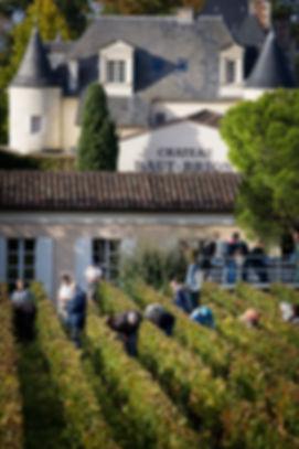 Chateau-Haut-Brion-vignes-et-raisins-8.j