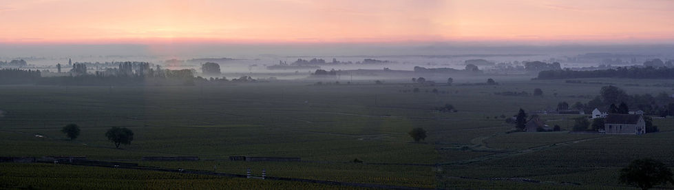 vineyard-at-dawn-moyen.jpg