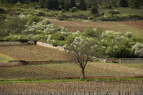 vineyards-landscape-moyen.jpg