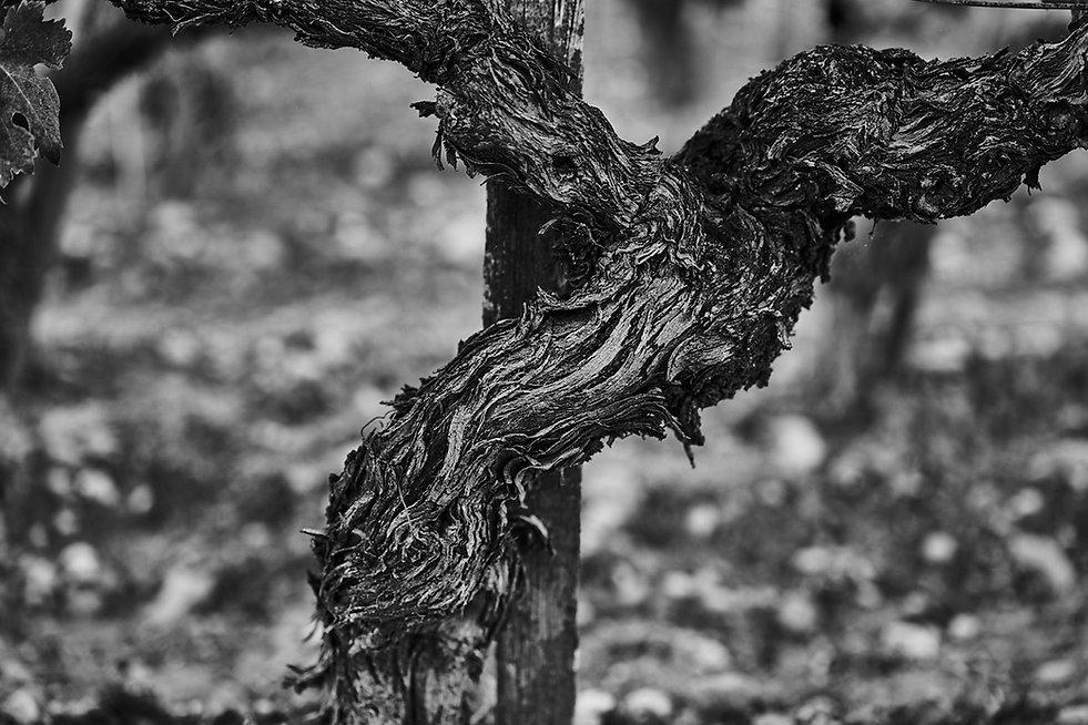 Vineyards-0162.jpg