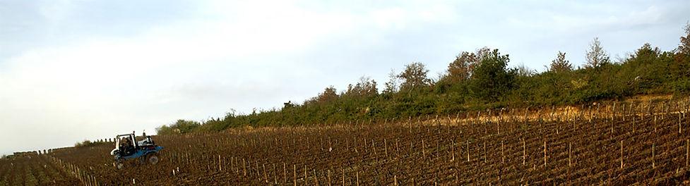 working-the-soil-in-chevalier-du-haut-mo