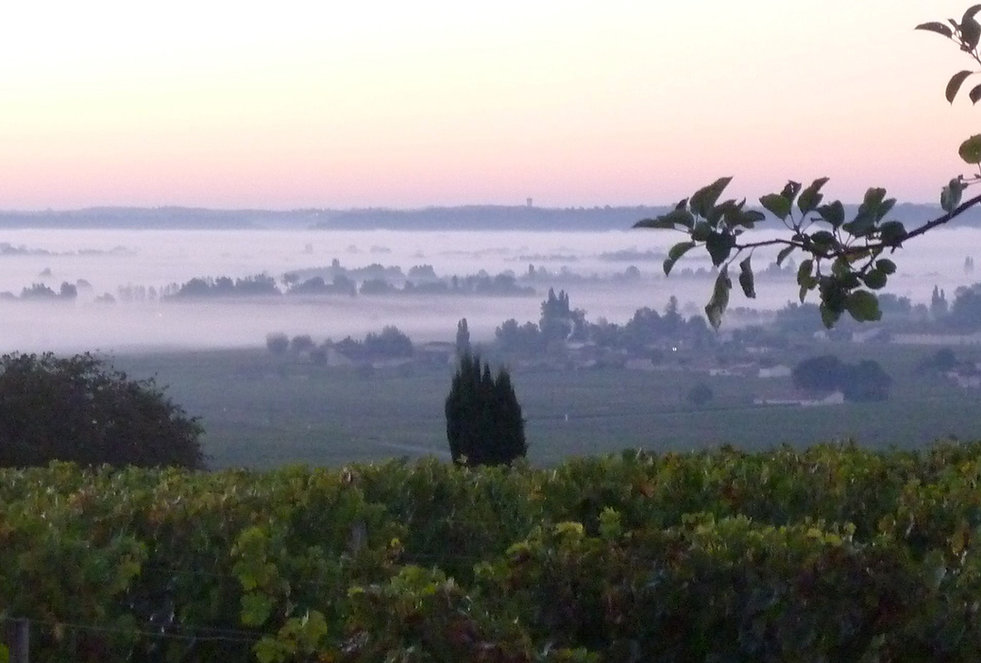 TR 7-Vue vigne et vallée.jpg