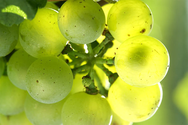 chardonnay-berries-moyen.jpg