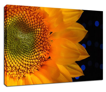 close-up-sunflower-nature-photograph-can
