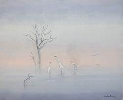 Oiseaux à Tangalé