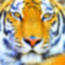 tigre ok.jpg