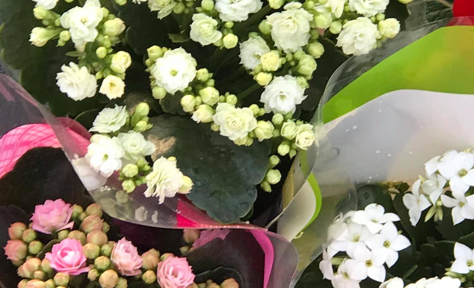 flores y plantas para regalar