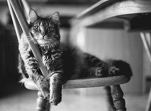 Shop Cat 4