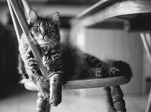 Shop Cat 3