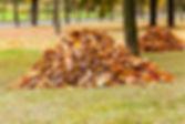 leave-piles-in-a-yard.jpg