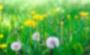 common-lawn-weeds.jpg