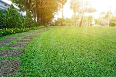 Beautiful-lawn.jpg
